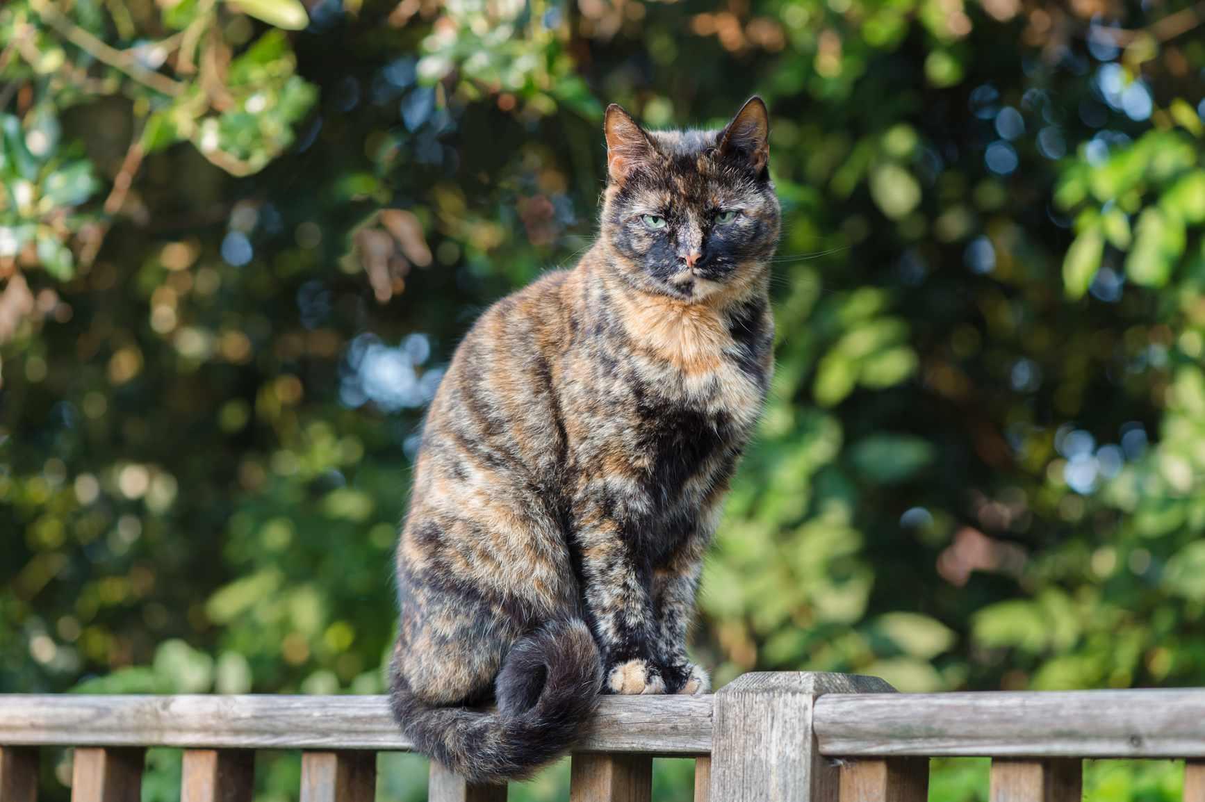 Gato Carey sentado en una valla