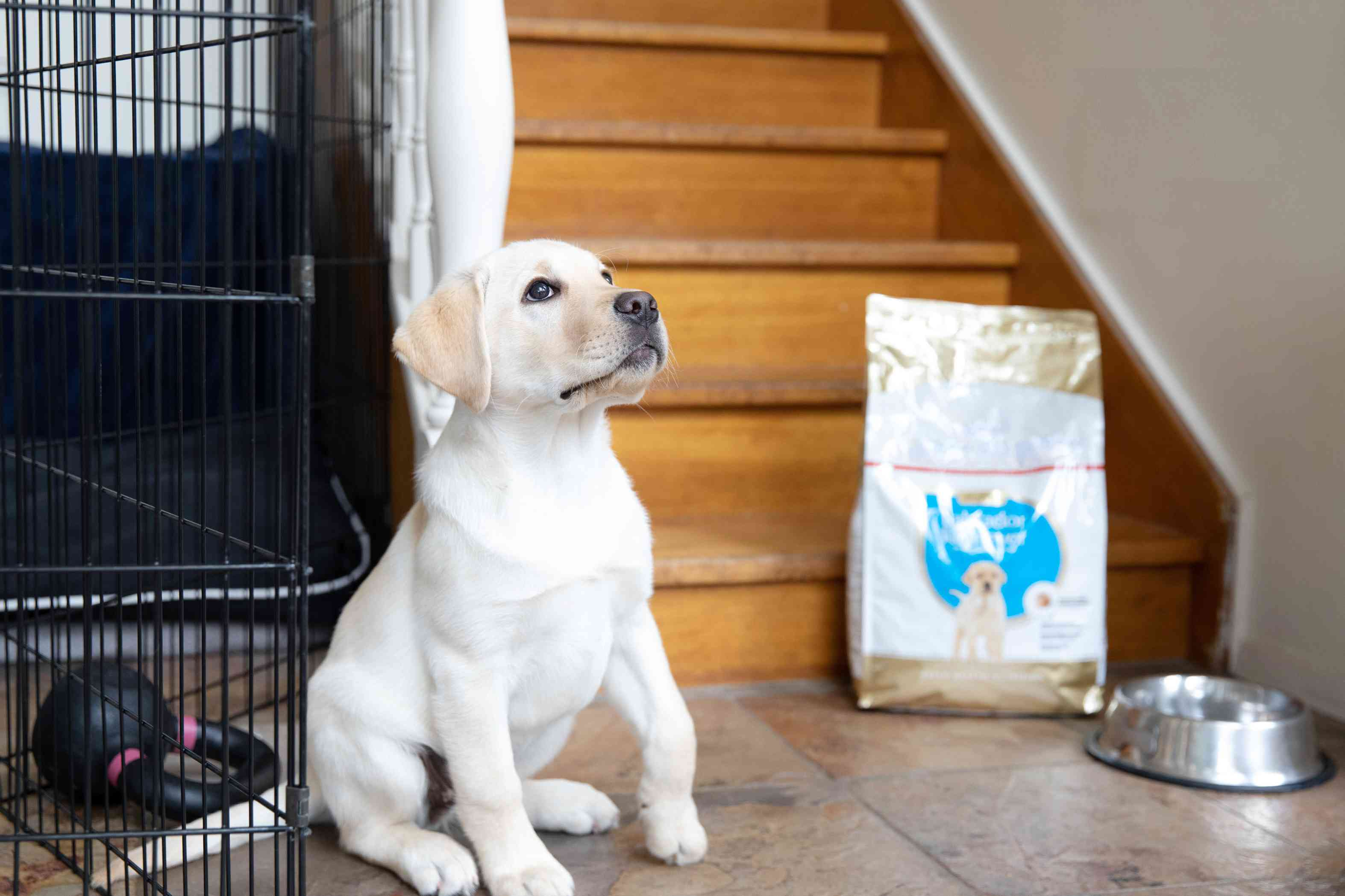White labrador puppy sitting next to bag of puppy food and metal bowl
