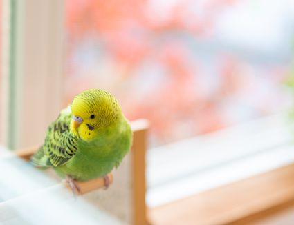 Pet bird enjoying free time in a room