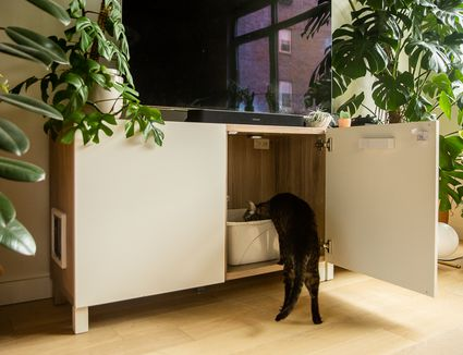 Black cat stepping into litter box located inside white cabinet with door open