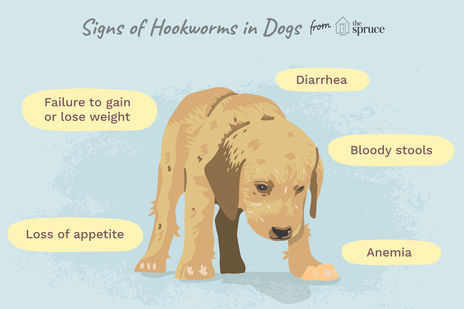 Roundworms And Hookworms In Dogs - Goldenacresdogs com