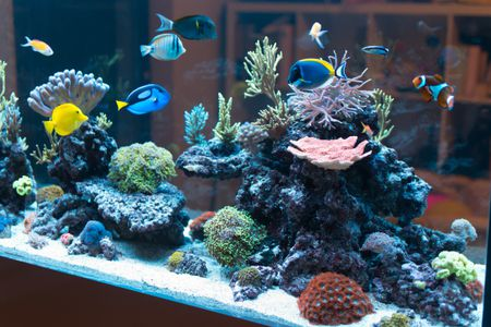 Making Money With Your Saltwater Aquarium
