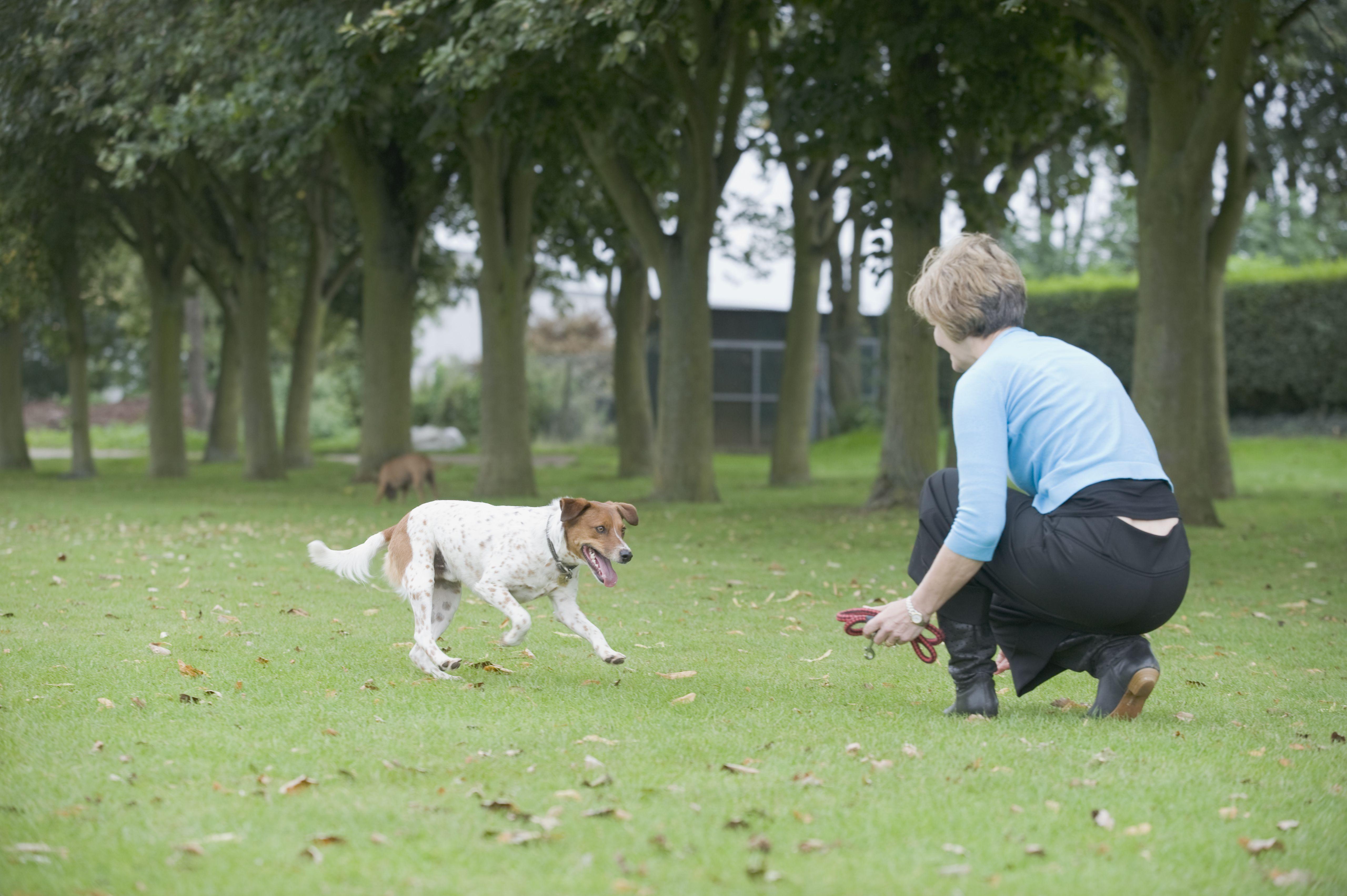 Perro mestizo que corre hacia una mujer agachada en el césped con una correa. Mujer caminando por un camino con un perro con una correa