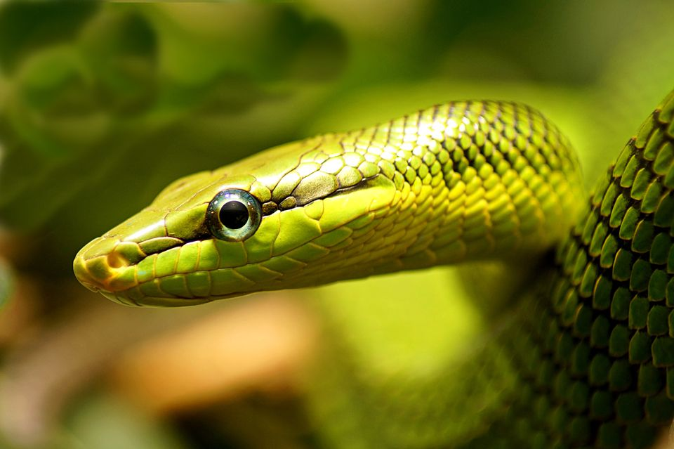 Close-up of snake on leaf