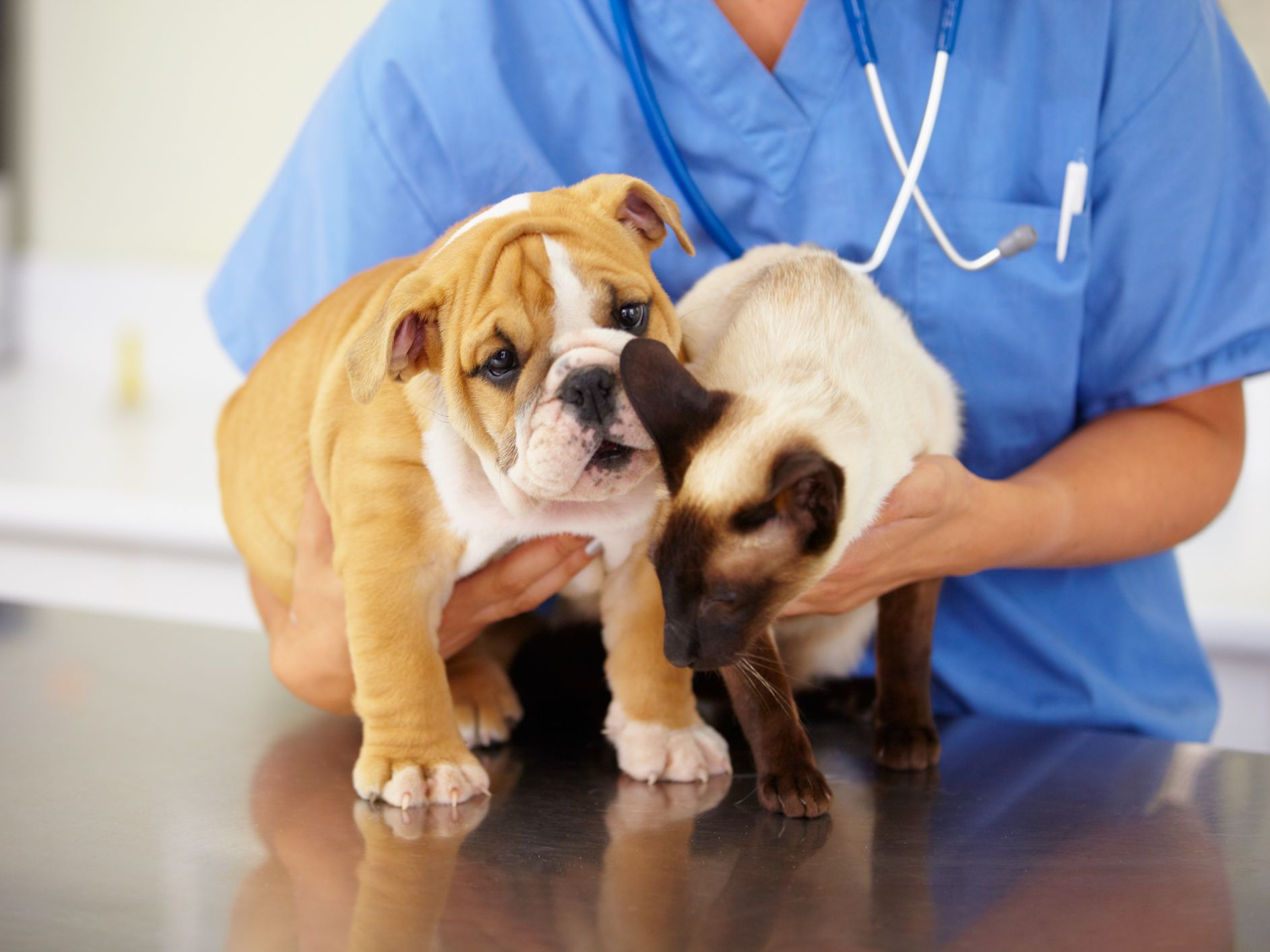 Anticonvulsant Seizure Medications for Dogs and Cats