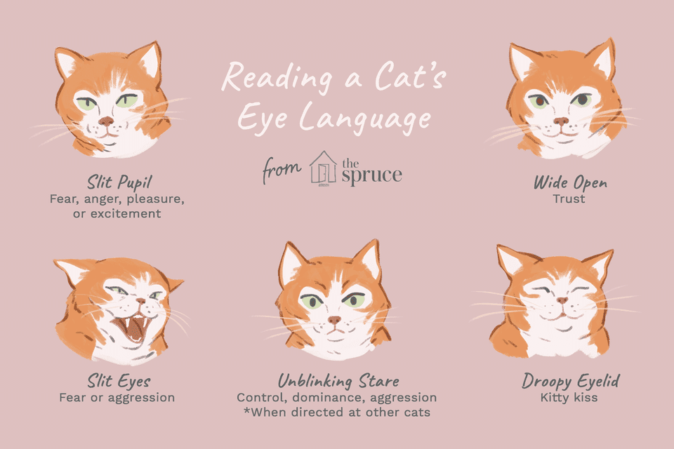 reading a cat's eye language