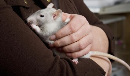 Young girl holding a rat in pet shop, close-up