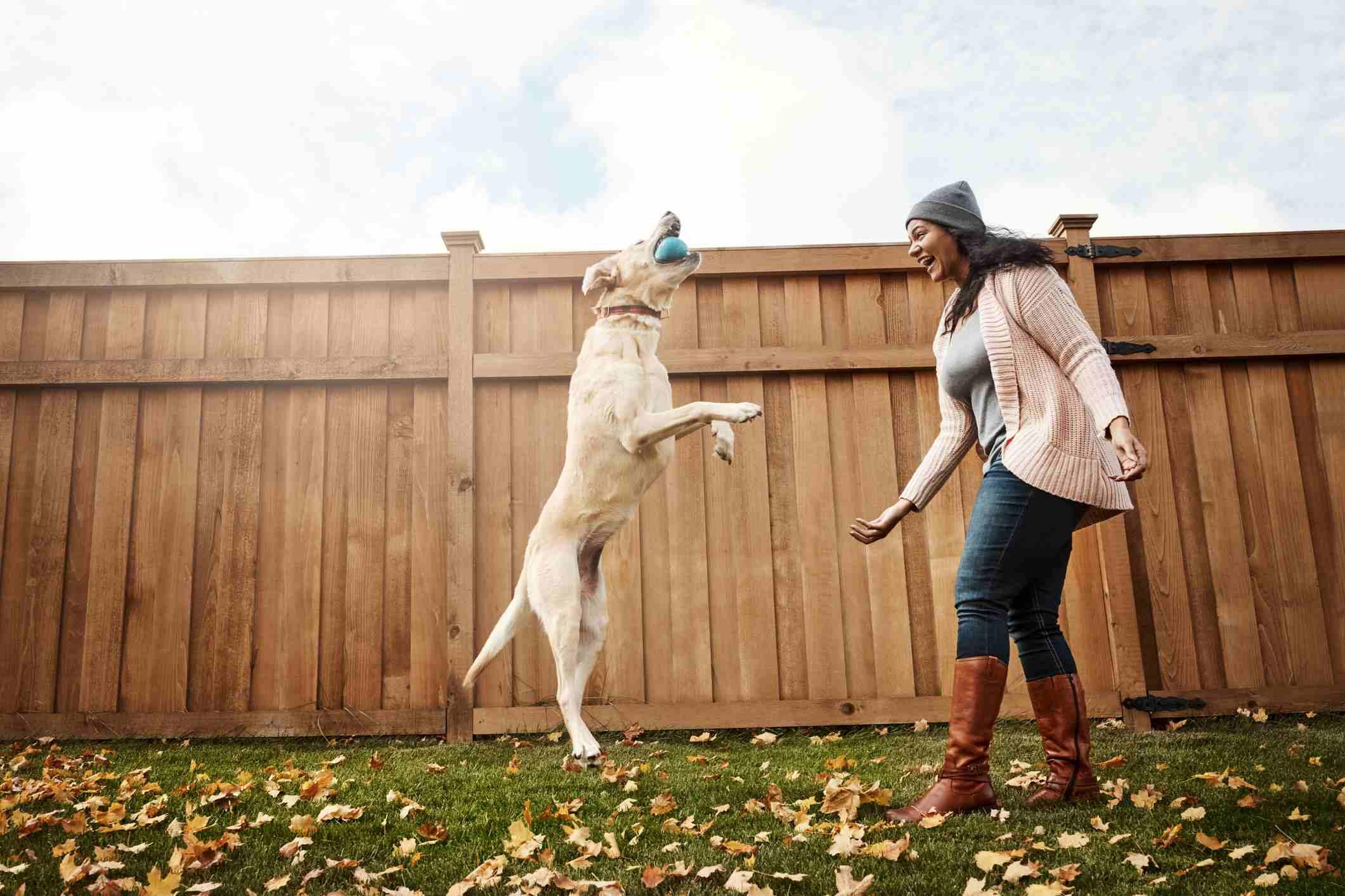 Dog playing fetch outside