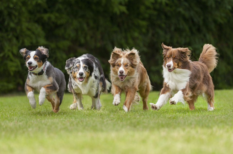 four dogs running in a row