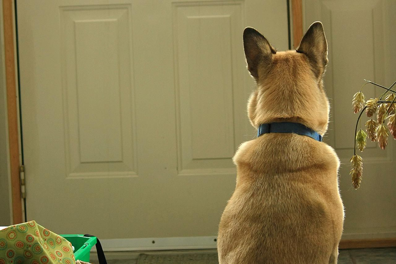 """Teach Your Dog to Respond to the """"Wait"""" Command"""