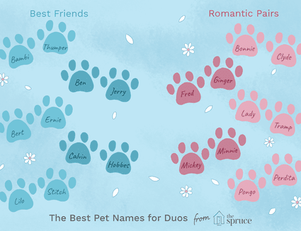 pet name ideas for pairs of pets
