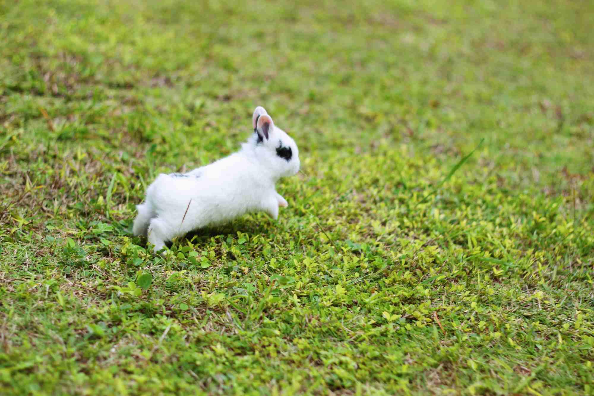 Conejo binkying