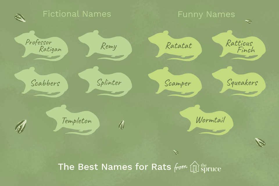 name ideas for pet rats