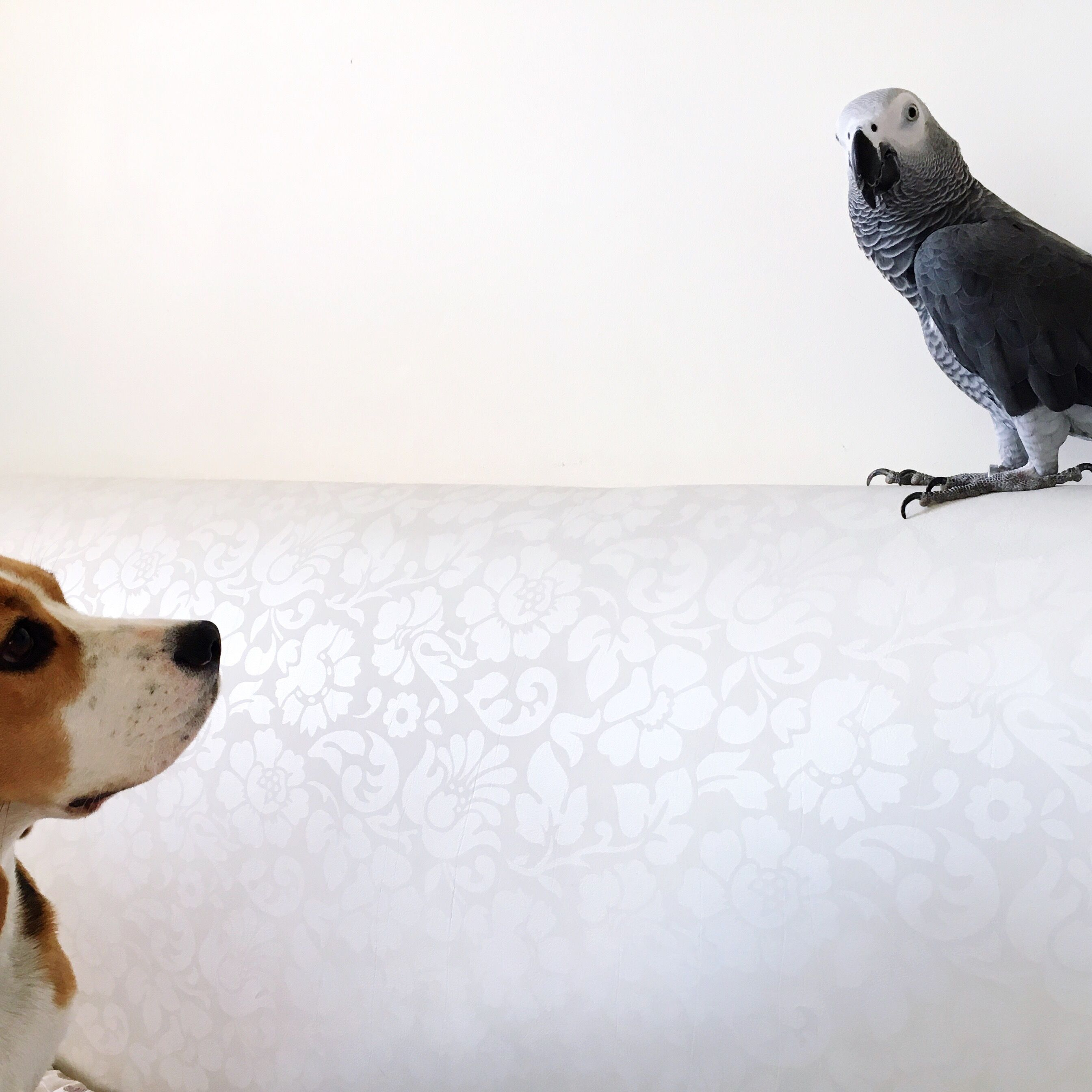 How to Train Your Dog to Be Around Pet Birds