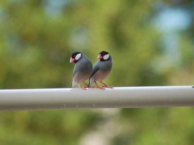 Small Bird Breeds