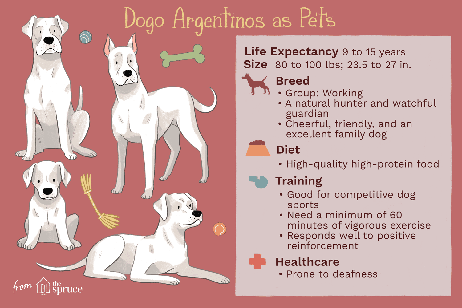 dogo argentinos as pets