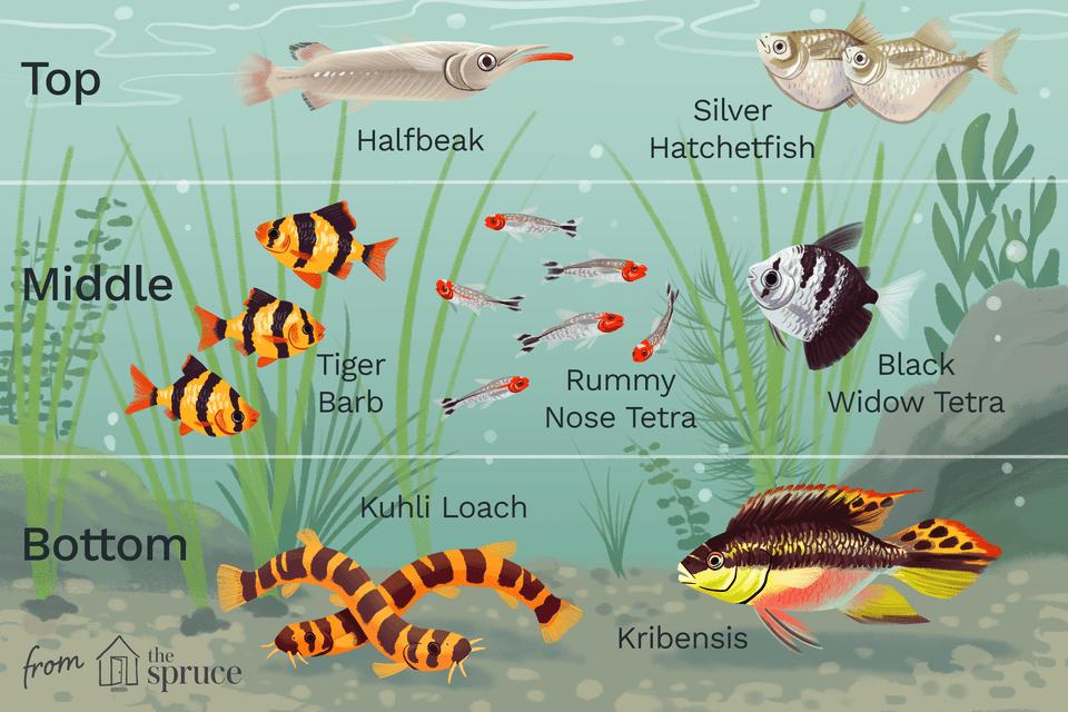 almacenamiento de peces de acuario ilustración uniforme