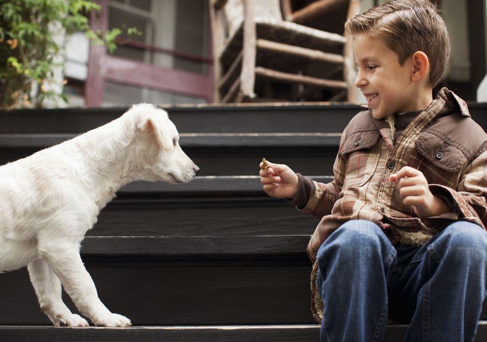 Niño jugando con cachorro en pasos al aire libre