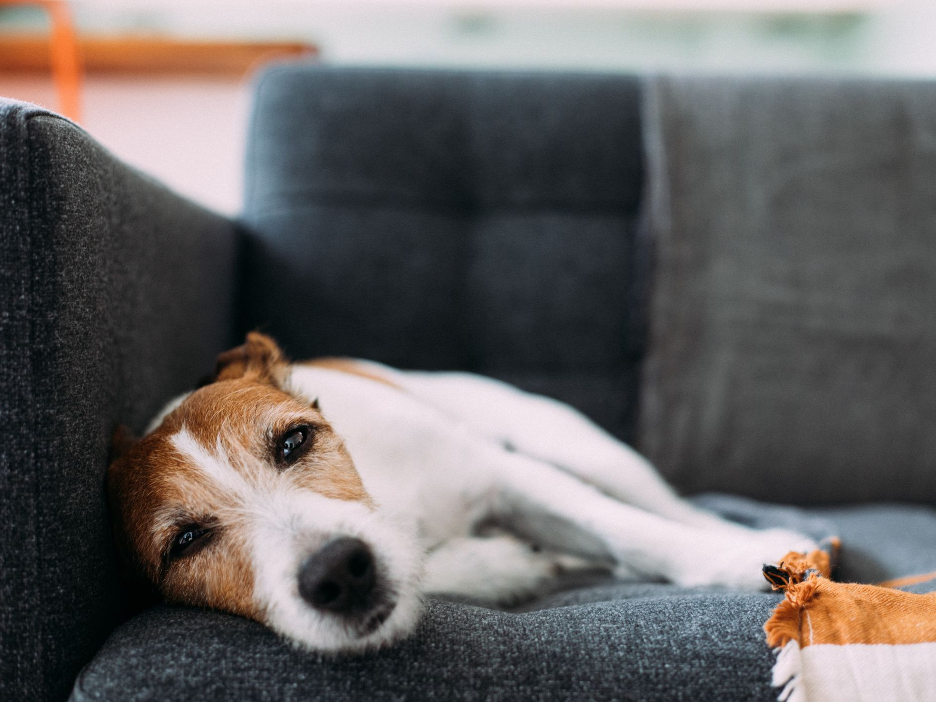 Why Isn't My Pet Acting Normal?