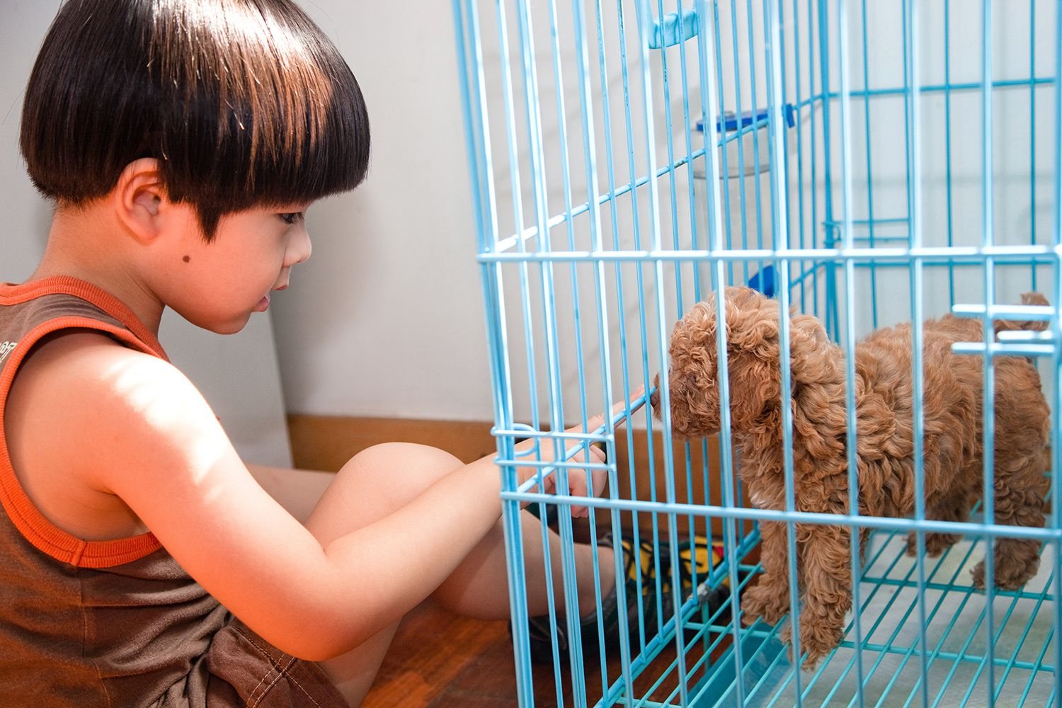 How to Kennel Board Your Dog