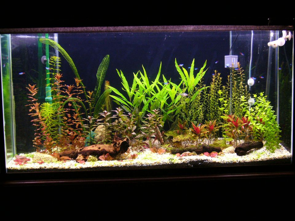 aquarium plants - real or artificial?