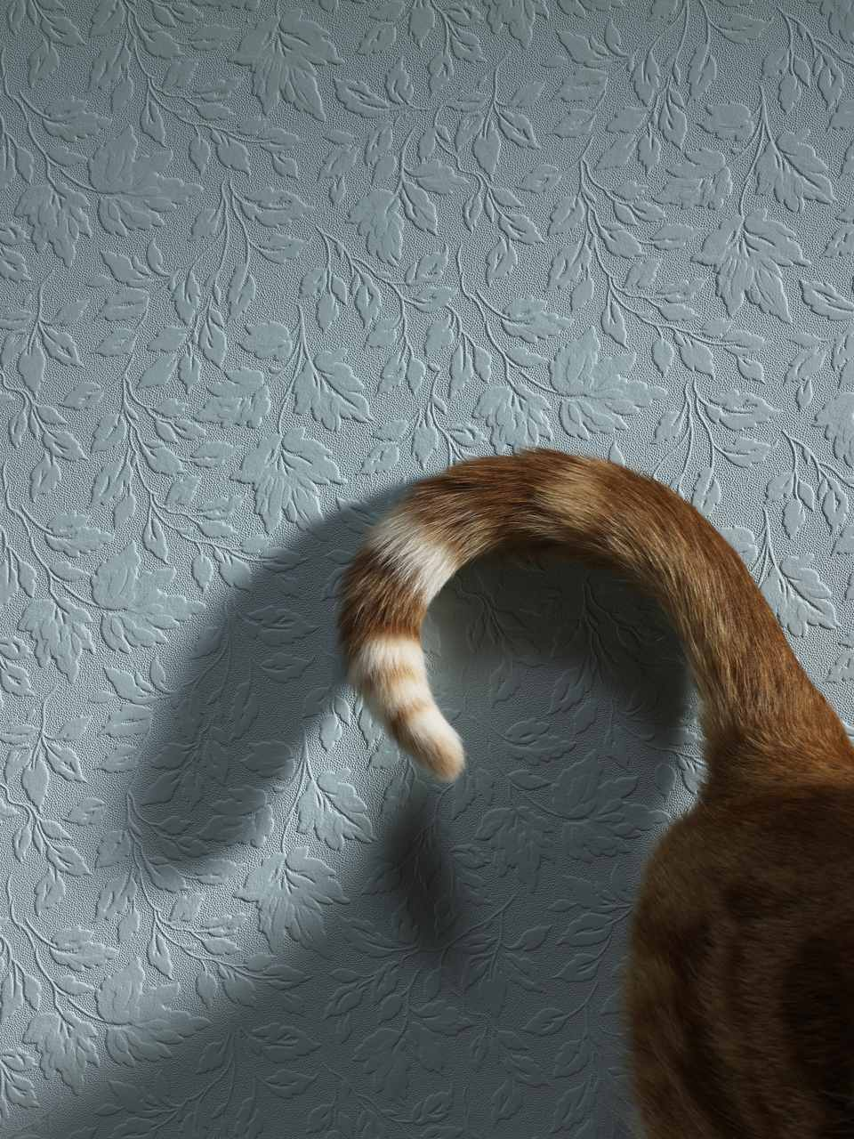 Tail of cat, close-up