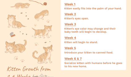How to be a responsible cat owner altavistaventures Choice Image
