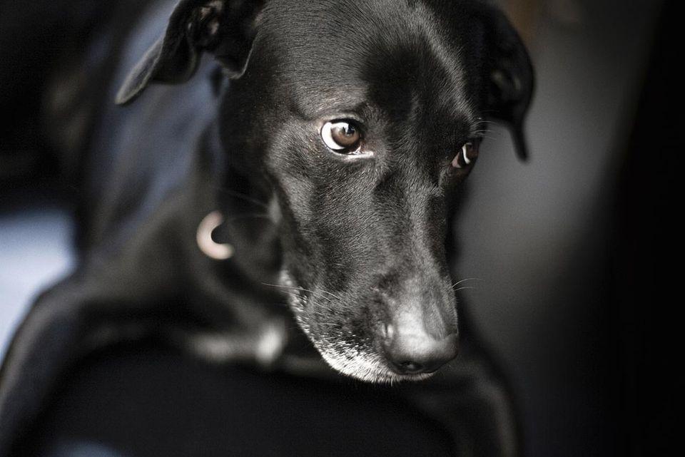 Un perro negro