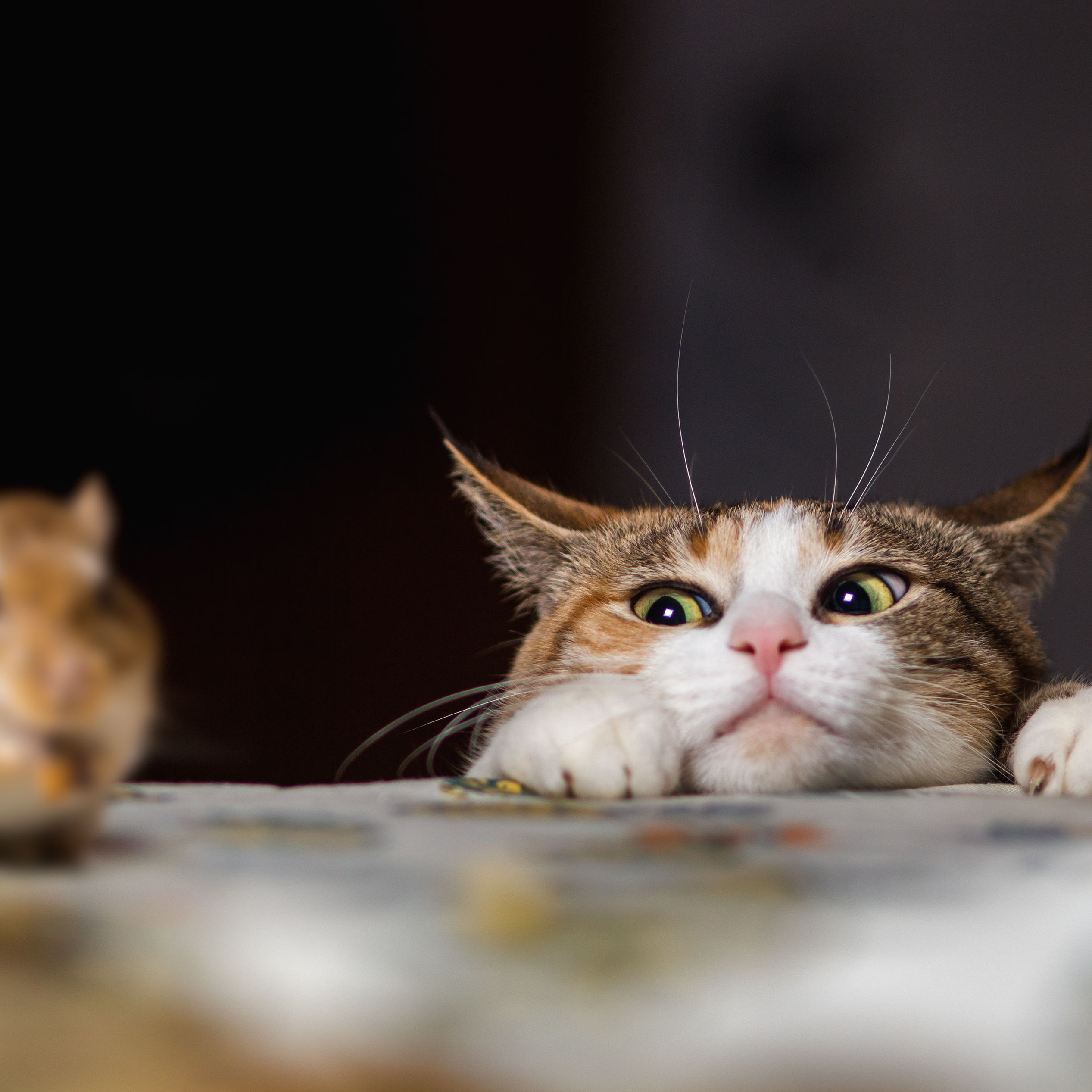 Cats and Mice: Potential for Disease and Other Dangers