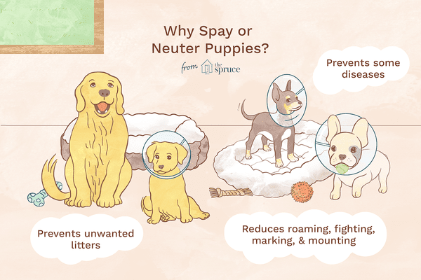 illustration of why to spay or neuter puppies