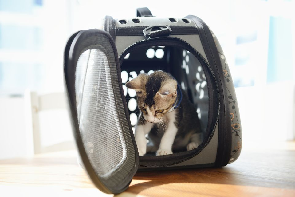 Kitten in a pet carrier