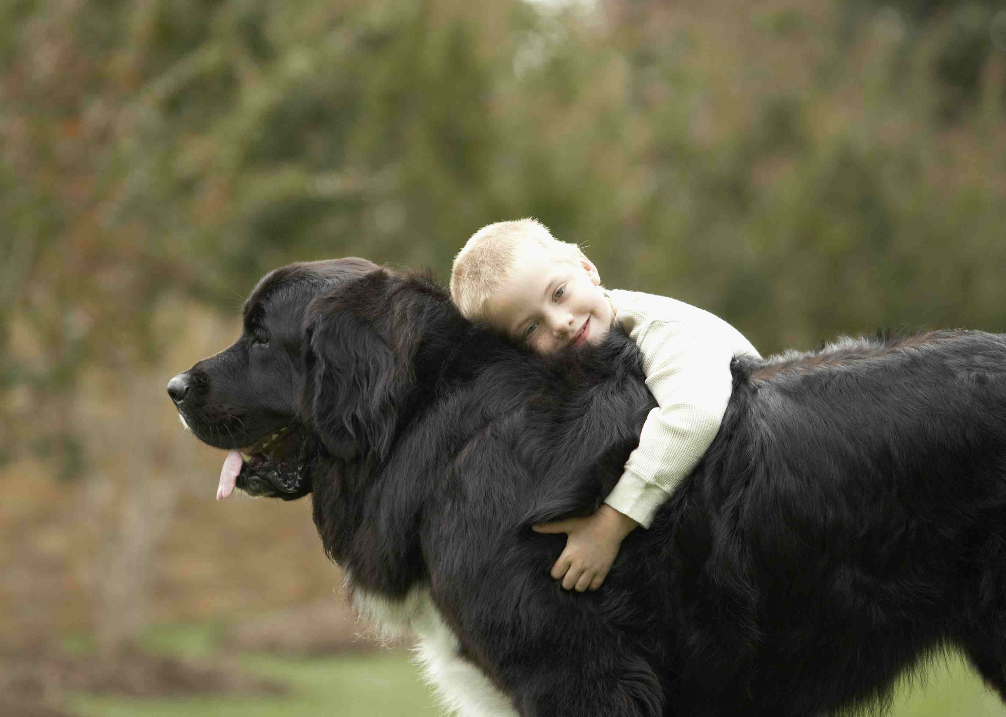 The Best Giant Dog Breeds That Make Great Pets