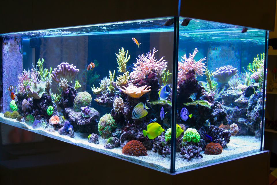Reef aquarium in the dark