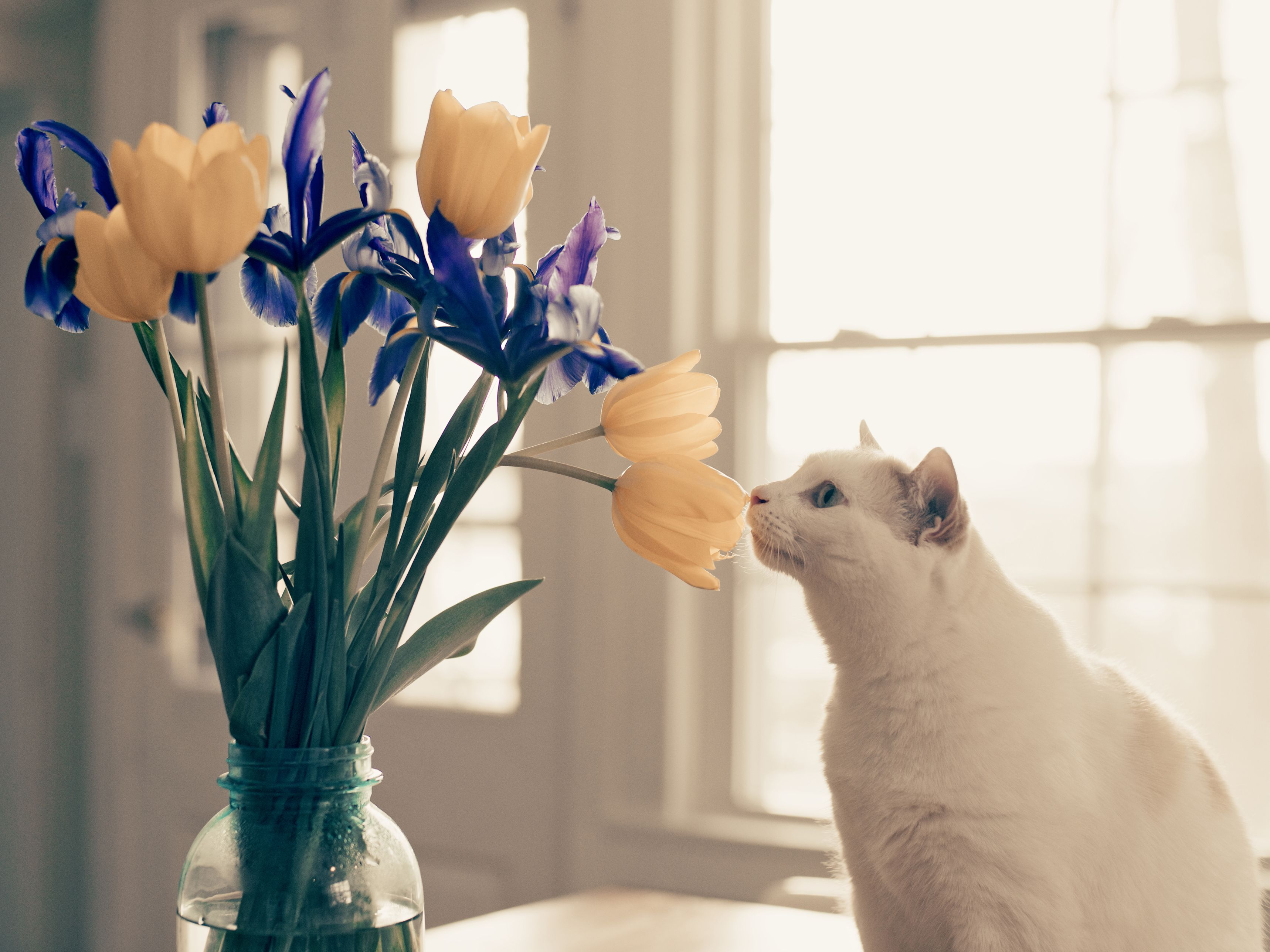 Image result for Why do flowers have scents