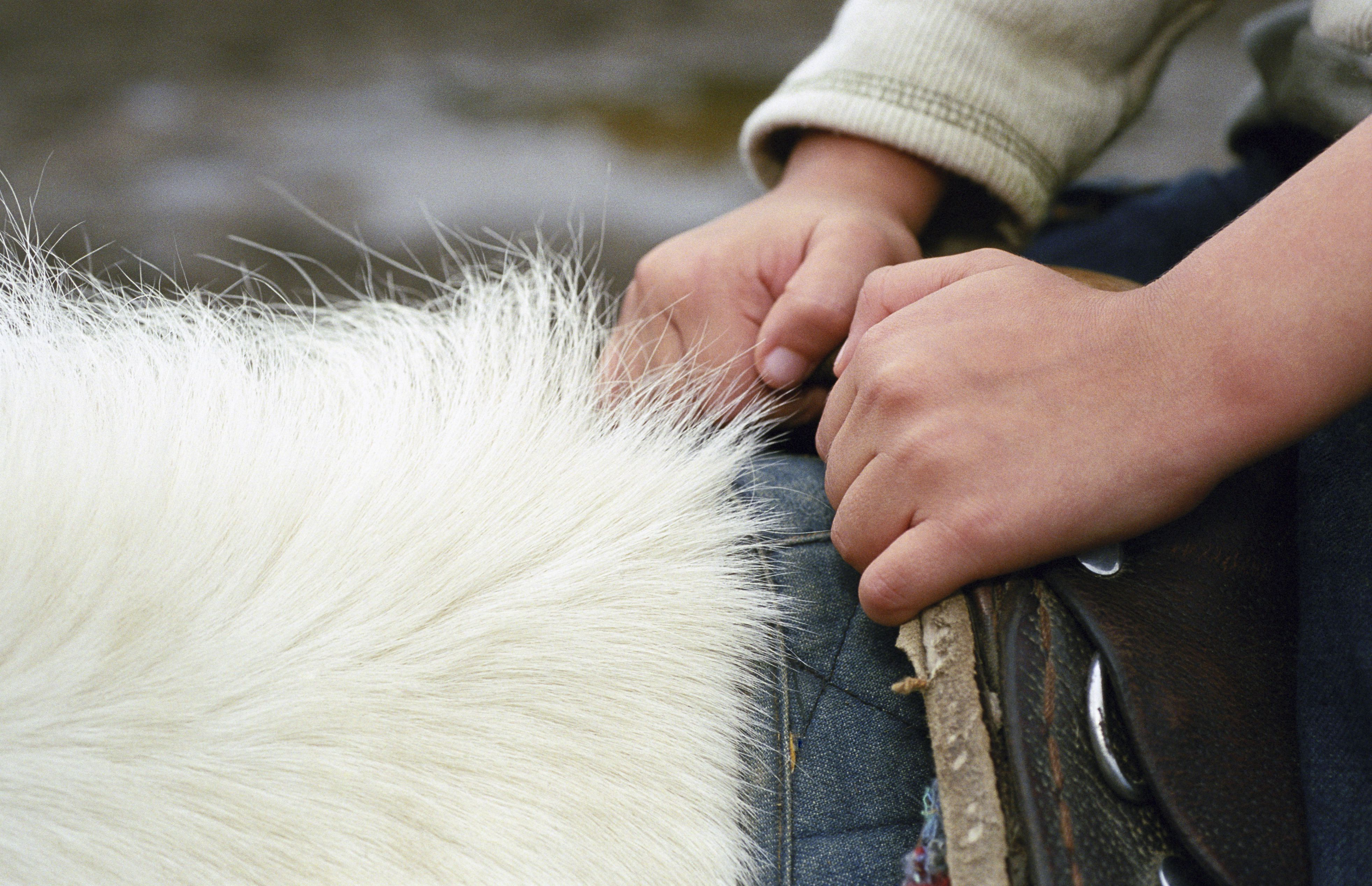 Boy (4-6) holding saddle on horse, close-up of hands