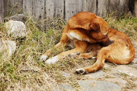 Safe Mosquito and Insect Repellent for Dogs and Cats