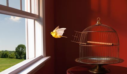 Canary escaping cage, flying toward open window