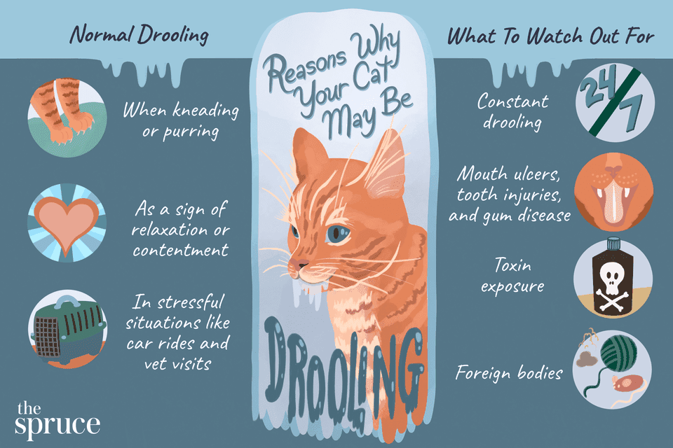 Reasons Why Your Cat May Be Drooling