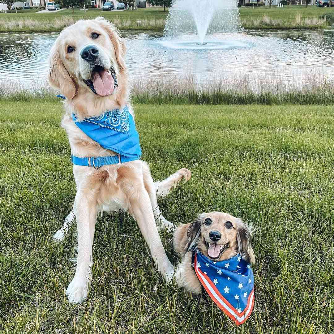 A dachshund wearing a bandanna sitting next to a golden retriever wearing a bandanna in the grass in front of a fountain.