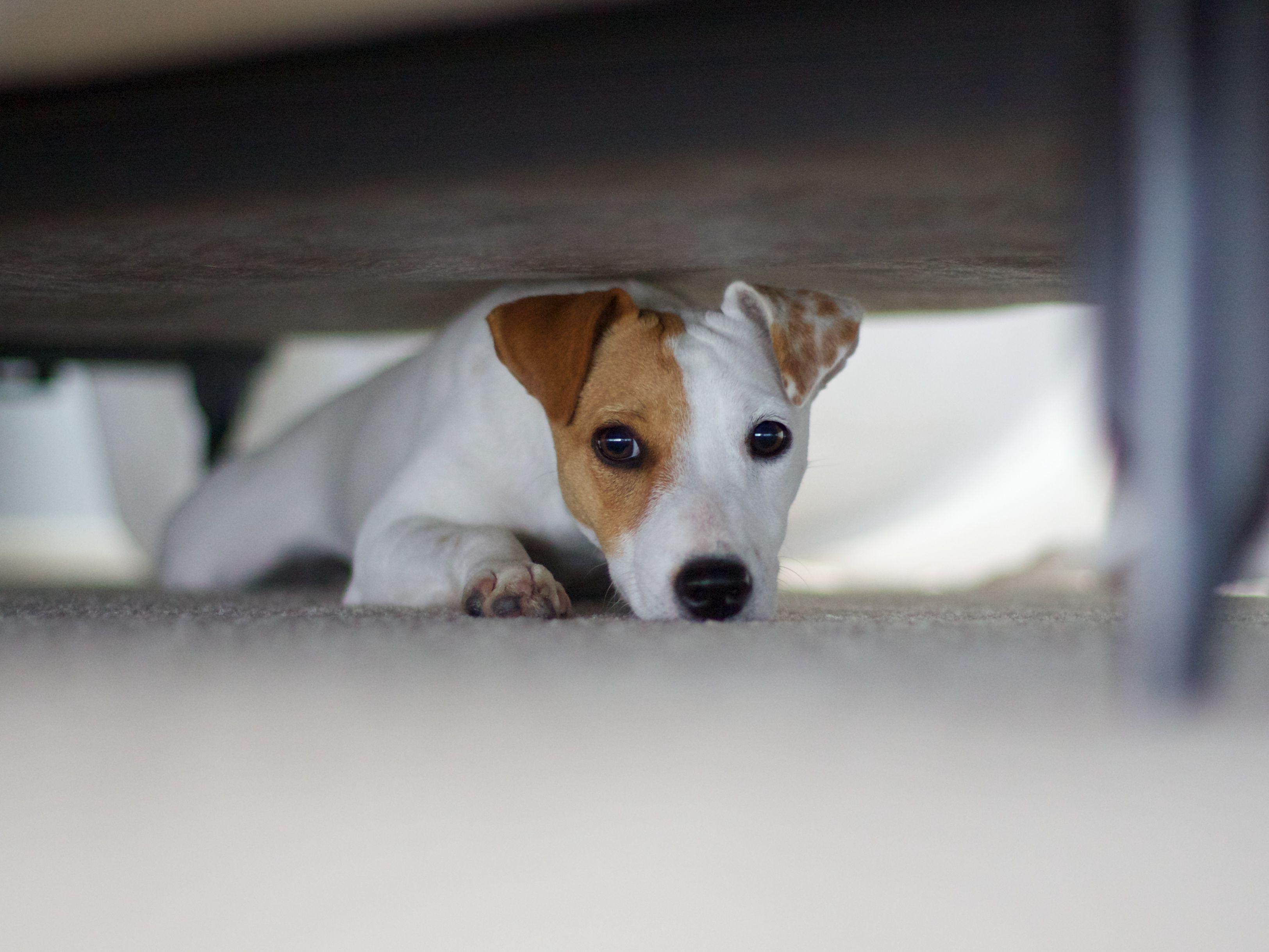 Build A Bear BABW Puppy Dog Barking Panting Push Sound Box