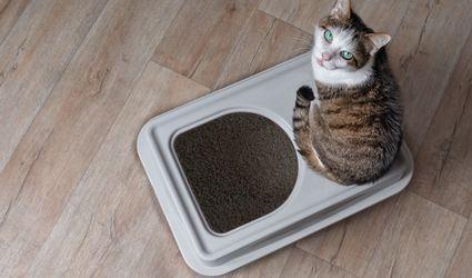 cat top entry litter box