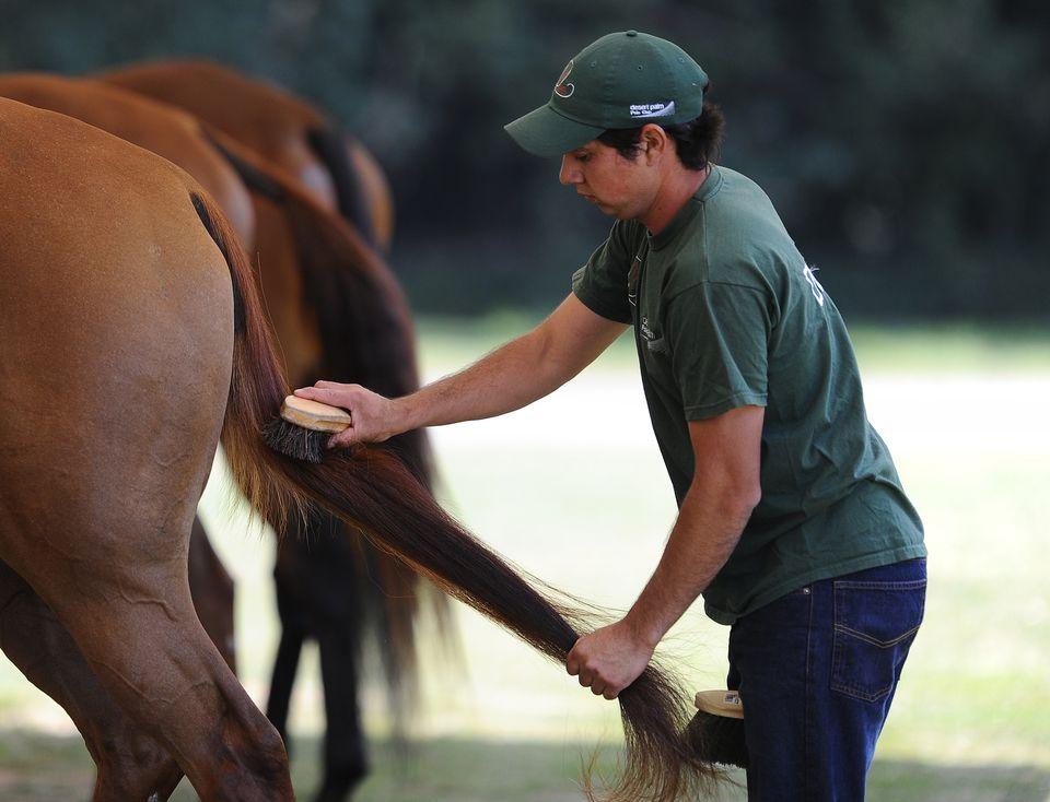 Hombre arreglando la cola de caballo.
