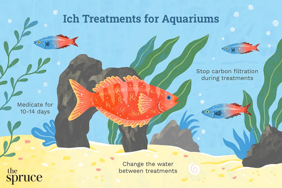 Ichthyophthirius multifiliis white spot treatments for fish