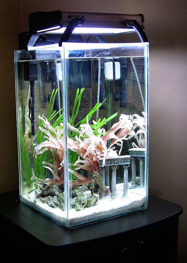 12g Tank with Seahorses