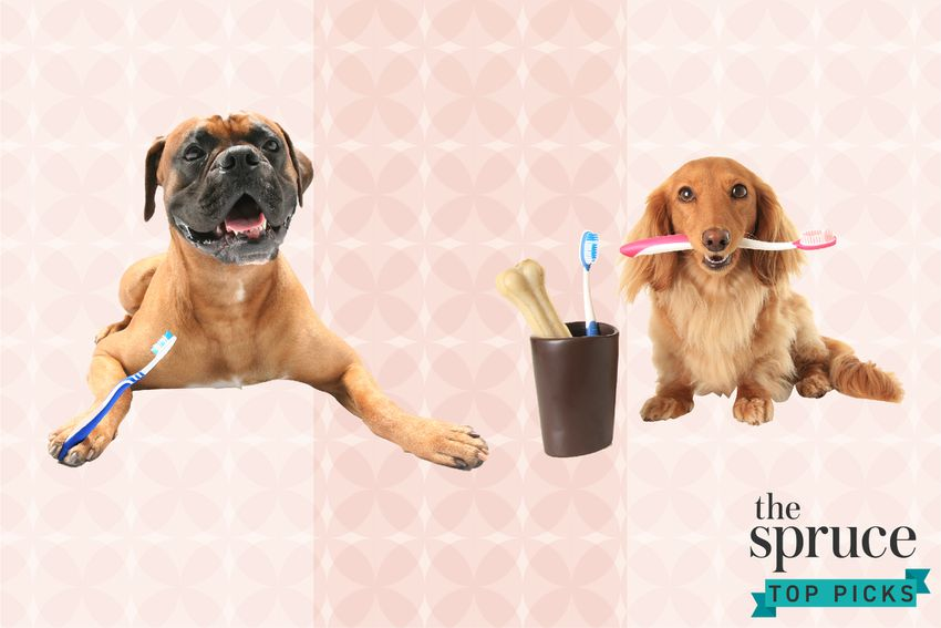 Best Dog Toothbrushes