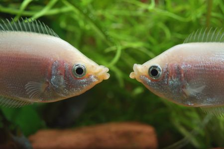 common fish names beginning with k
