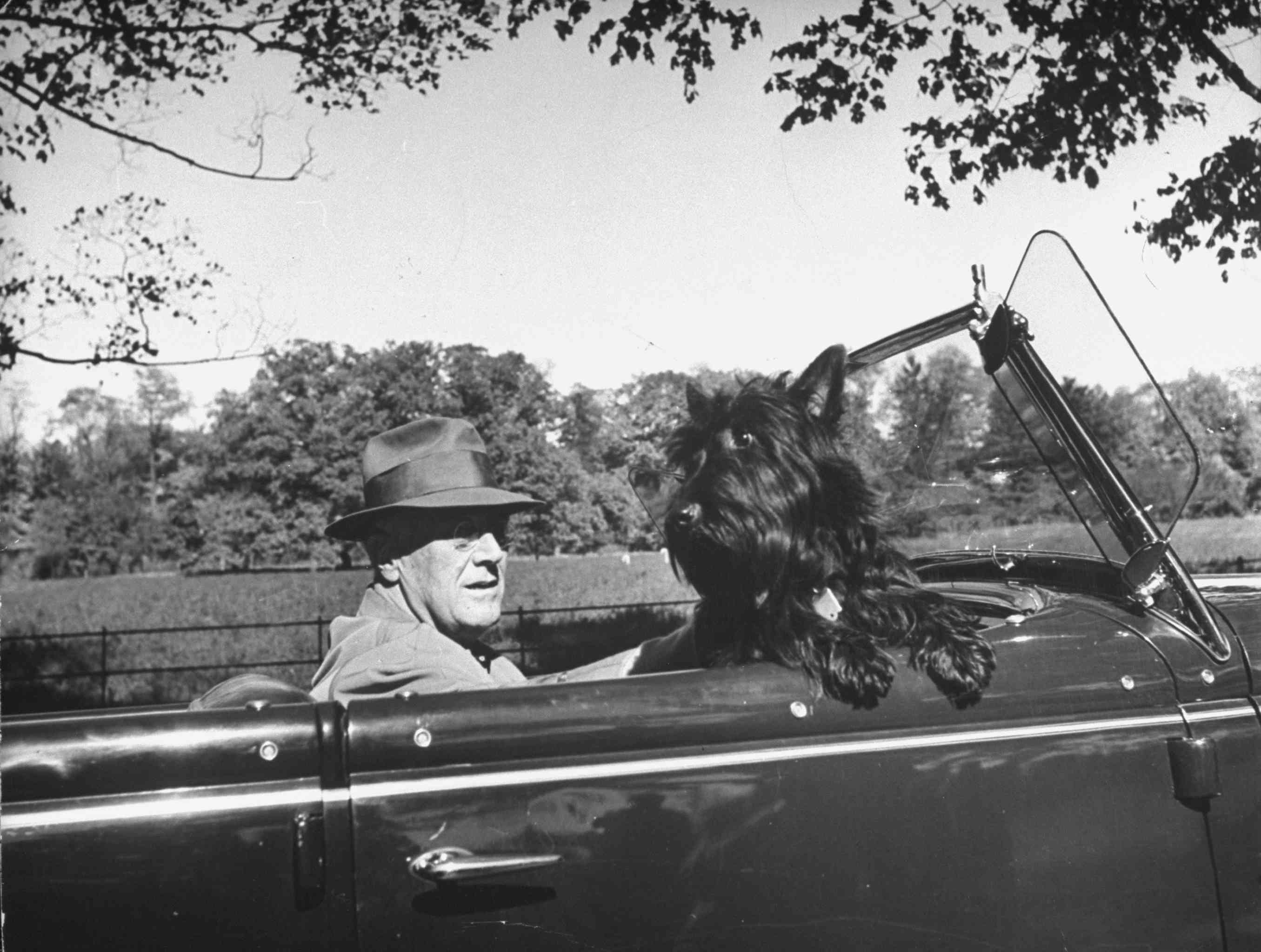 President Franklin D. Roosevelt driving in his convertible with his dog Fala through Hyde Park.