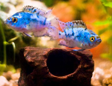 What Are Common Fish Names Beginning With J