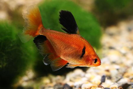 Common Fish Names Beginning With S