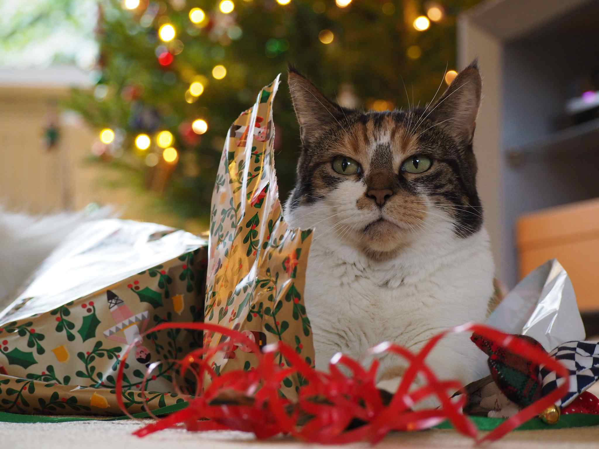 A cat sitting on torn wrapping paper